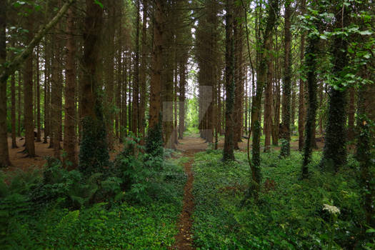 STOCK: Aisles of Trees