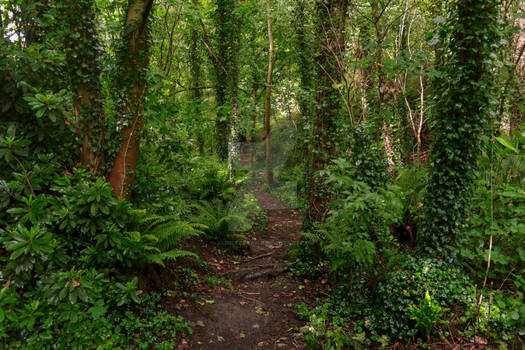 STOCK: Overgrown Path