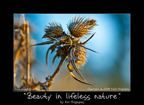 Beauty in lifeless nature