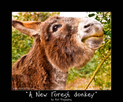 A New Forest donkey