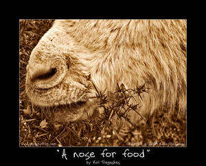 A nose for food