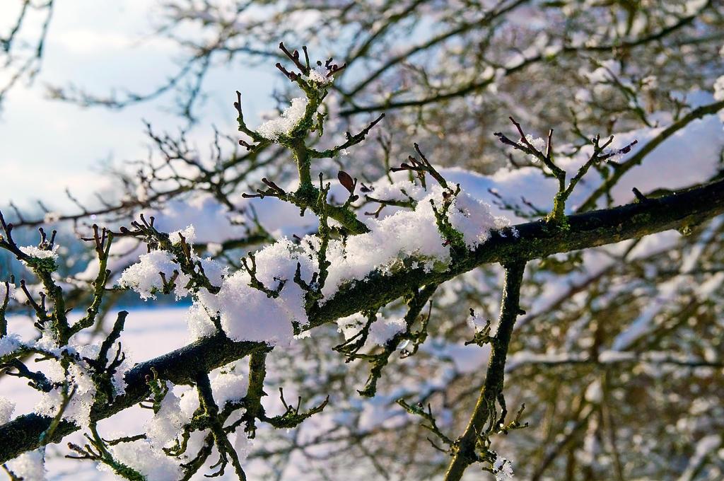 First Snow by koltregaskes