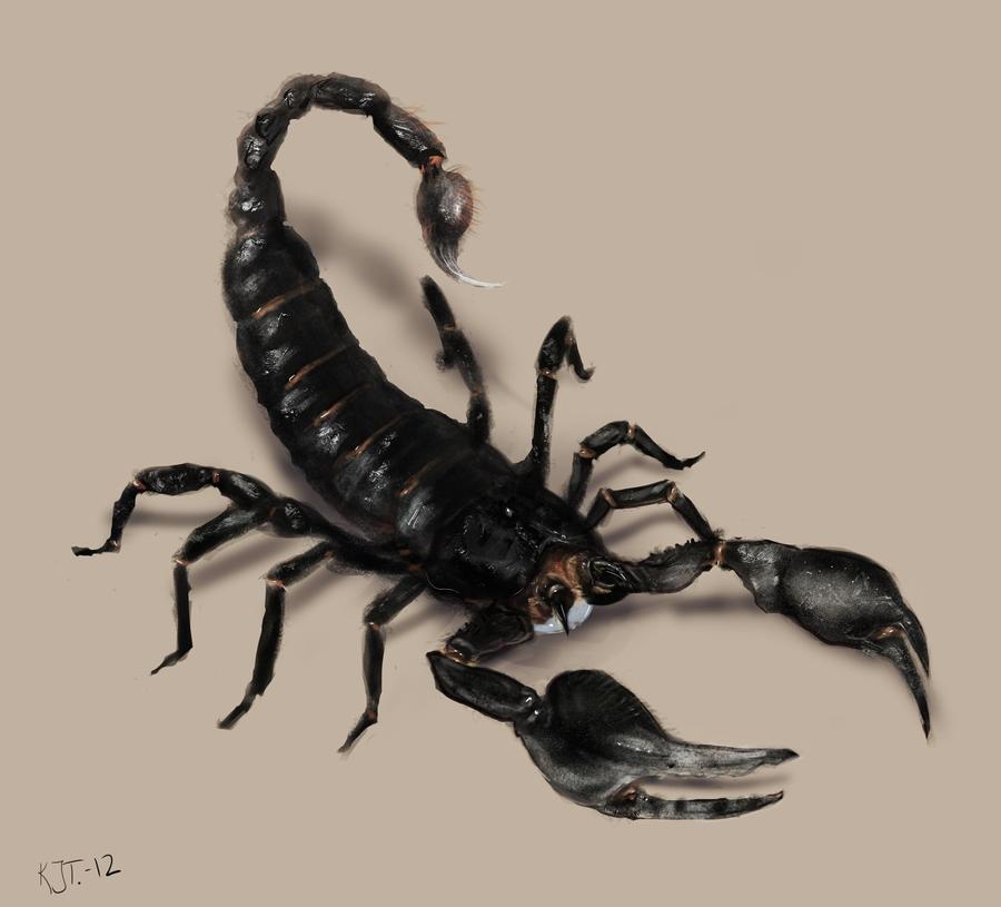 scorpion by RamenRamen on DeviantArt