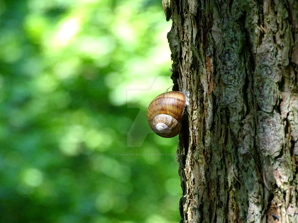 Snail by thisaintmyday
