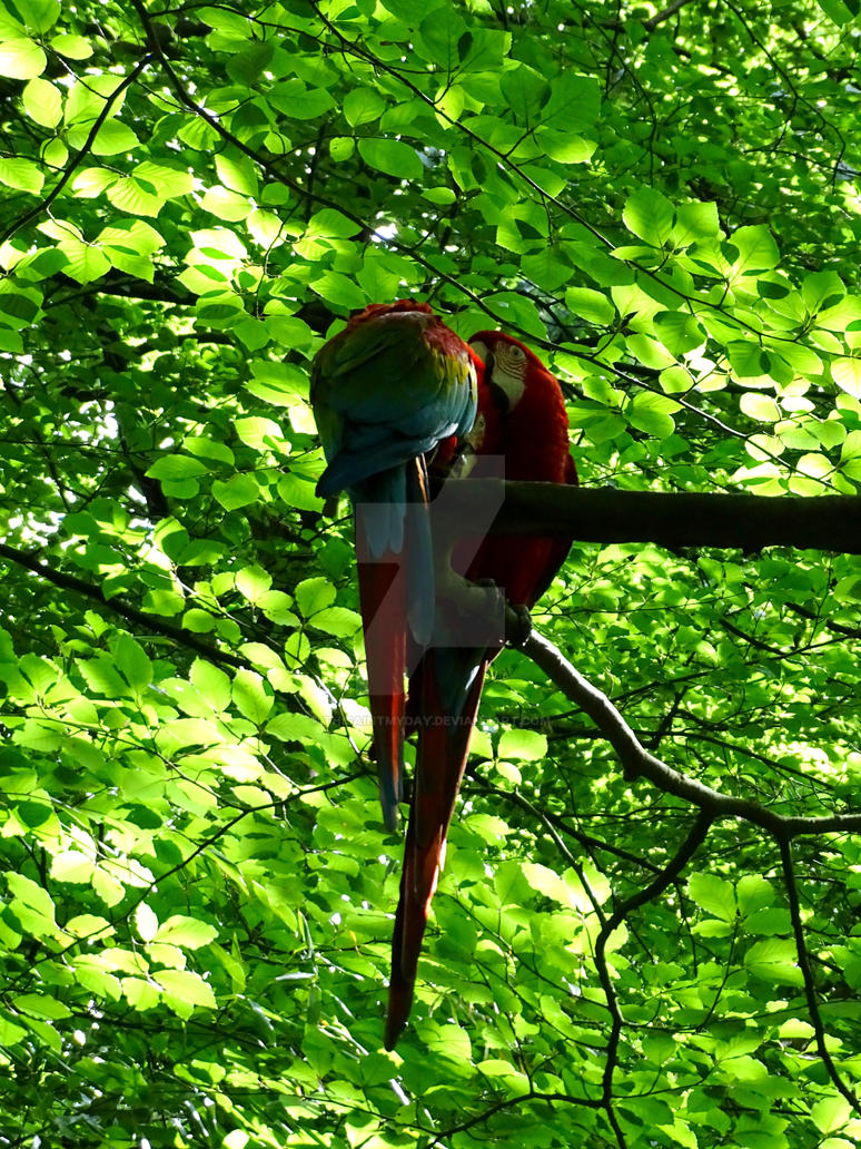 Macaws in the Tree by thisaintmyday