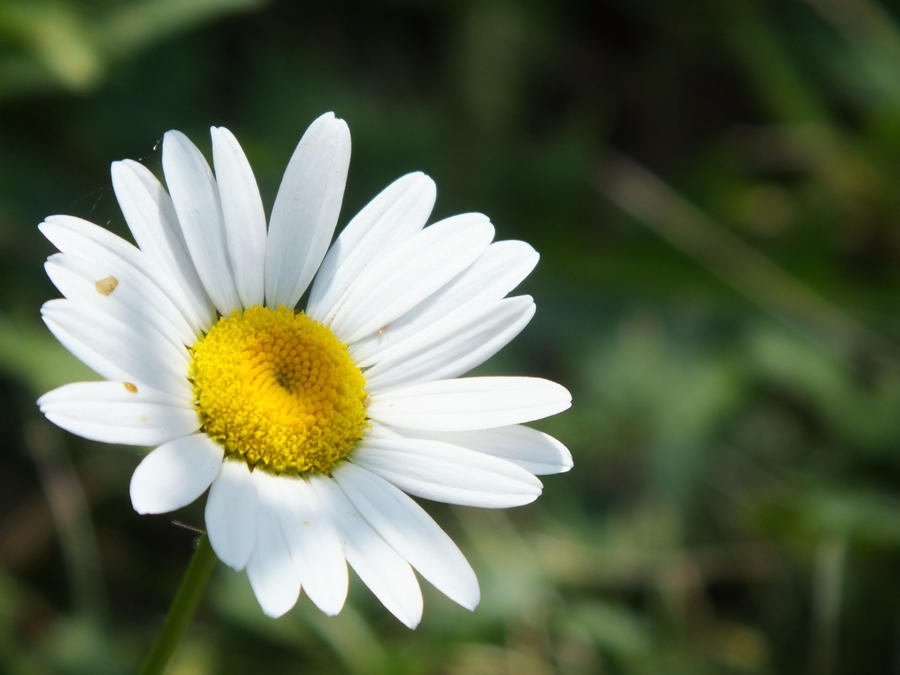 Sunny Flower 2 by ItsOnlyInMyHead