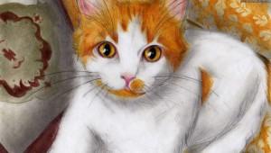 Akira-Hikari's Profile Picture
