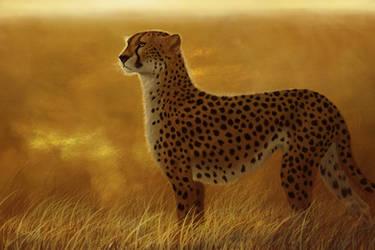 Roaming the golden fields by Midnight-Sun-Art