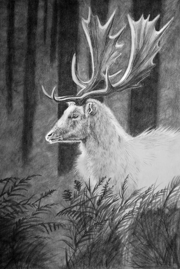 White Fallow by Midnight-Sun-Art