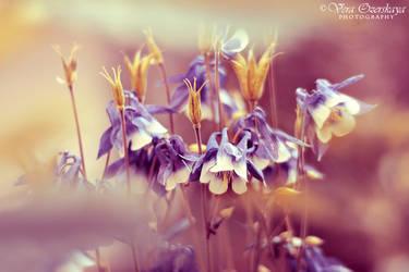 Softness by VeraOzerskaya