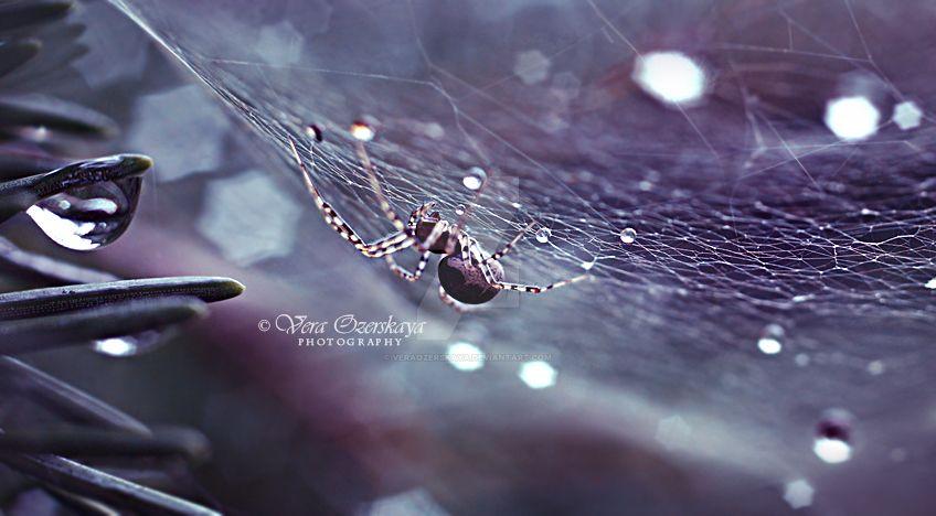 Creator by MilenaKalias