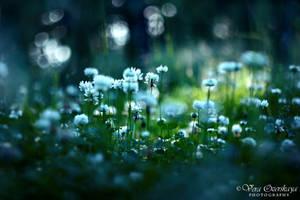 Forest lawn by VeraOzerskaya