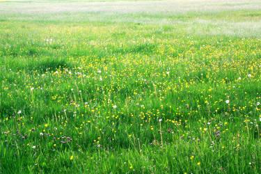 Blumenwiese by reborn1024