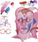 Twi'lek Character Development Sheet by Mothboss