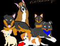 Nintendogs - Chihuahua and... by charizard2000