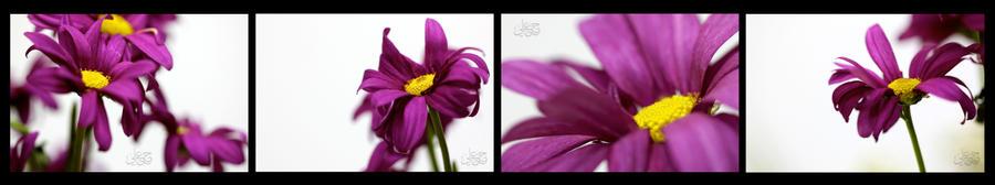 Purple by 79oO9ah