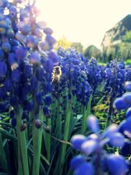 Bee by barbimajoros