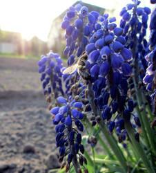 Bumble bee by barbimajoros