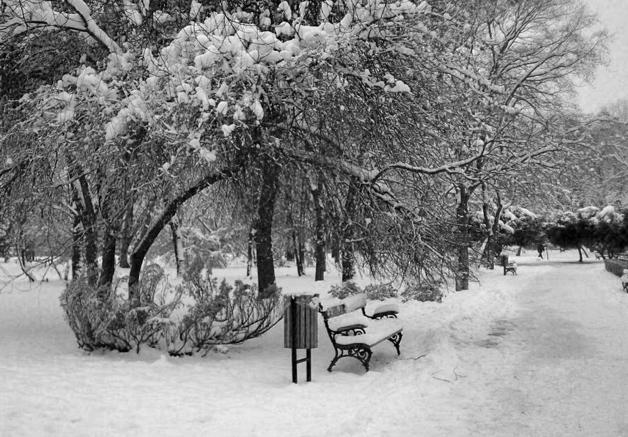 Black and White winter by Ice-Beat on deviantART