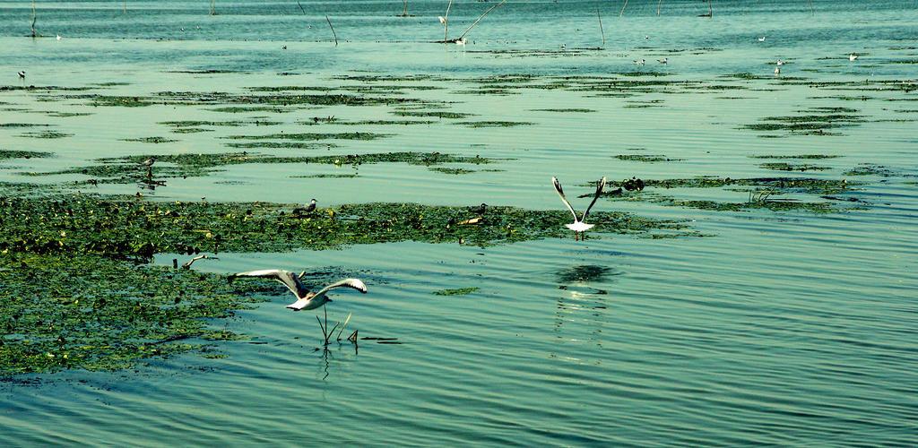 Danube Delta - Romania by GX10