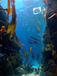Underwater Scene by soraneko