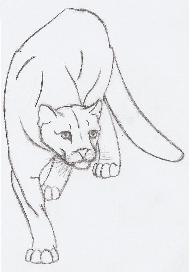 Cougar Face Line Drawing : Mountain lion quick sketch by metalharpey on deviantart