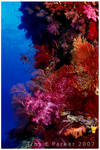 Coral Reef Riot