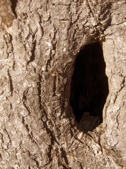 List of Synonyms and Antonyms of the Word: tree hole