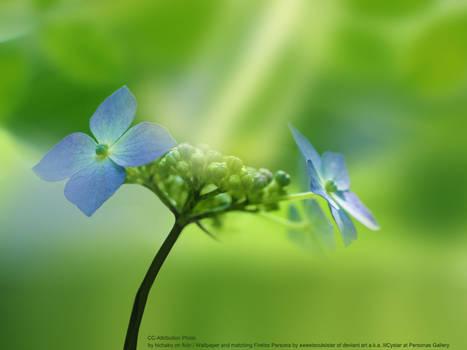 Bluebells Nature Wallpaper