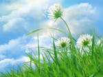 Daisy Field and Sky Wallpaper