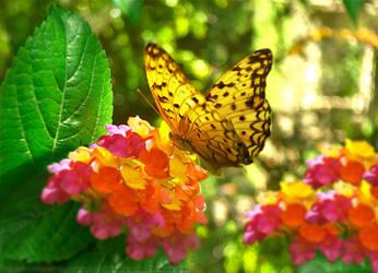 Summer Garden Butterfly