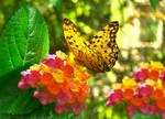 Summer Garden Butterfly by SweetSoulSister