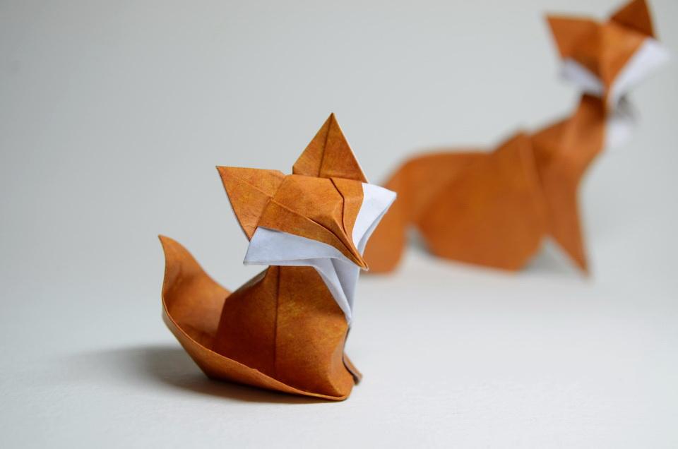 Fox Cub 2014 By Htquyet On Deviantart