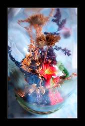 Flower Portrait by dilekt