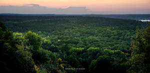Grunewald Forest at Sunset by cybercake