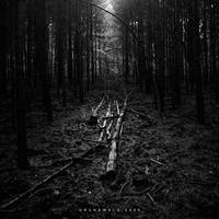 Light in the Grunewald by cybercake