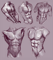 Abs study by fralea