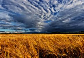 Wheat-field-in-storm by KarabansRaven