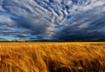 Wheat-field-in-storm