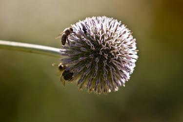 Bienen auf Distel by KarabansRaven