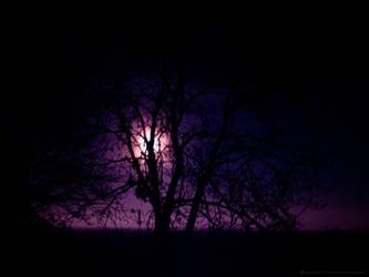 Moon behind tree 1 by KarabansRaven
