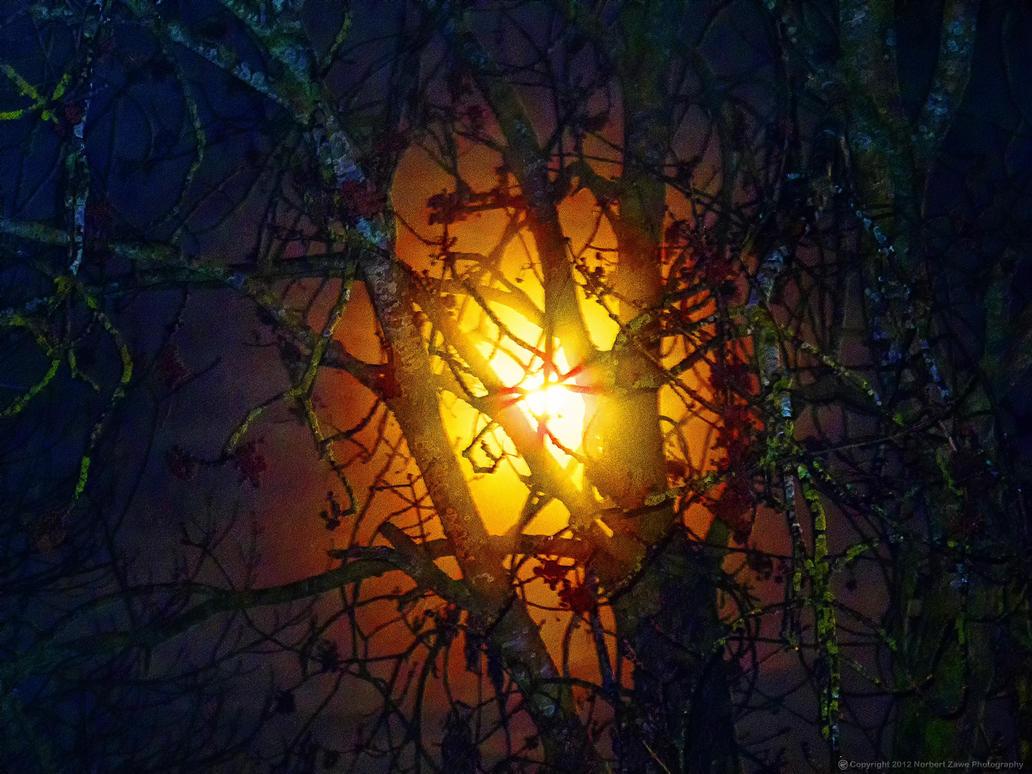 Moon-behind-tree-2 by KarabansRaven