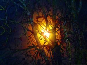 Moon-behind-tree-2