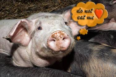 do-not-eat-me-OG by KarabansRaven