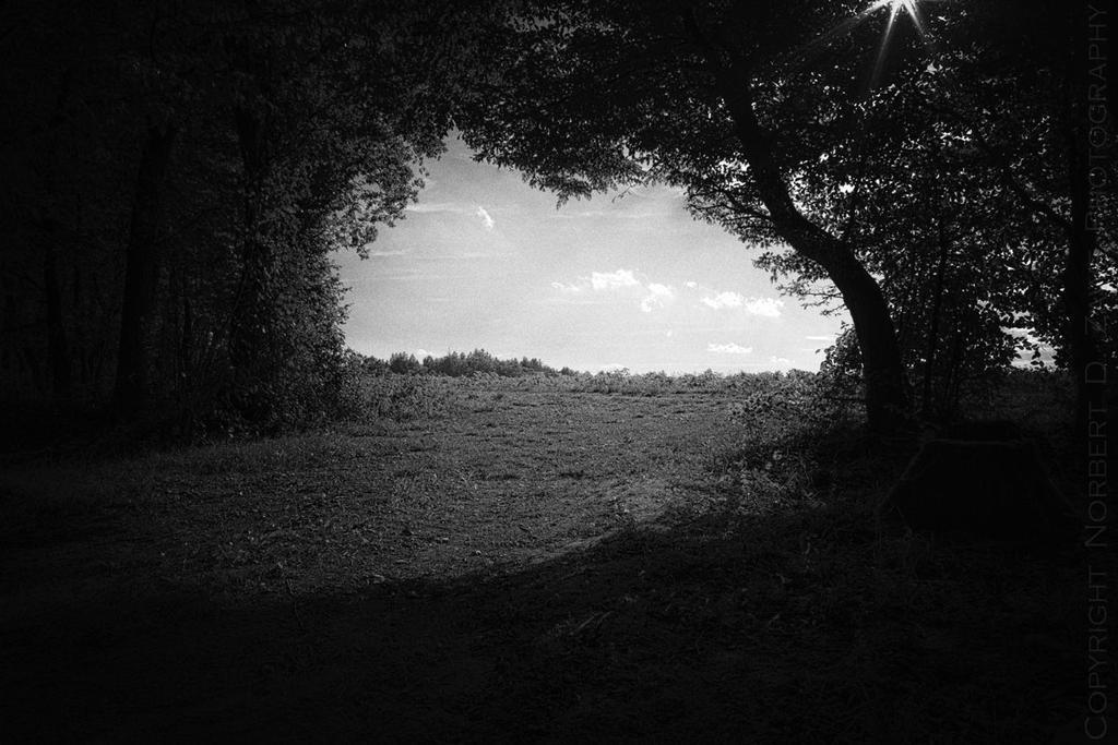 NT Wald 30.August2013  NorbertZawe 00002-1200 by KarabansRaven
