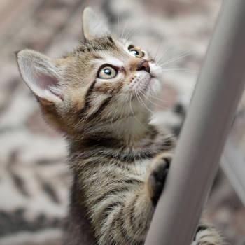 Cuteness, yes? by skyleaf