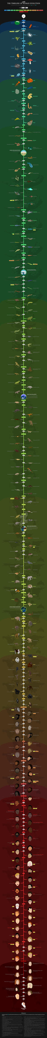 The timeline of human evolution by ChristianSpreafico