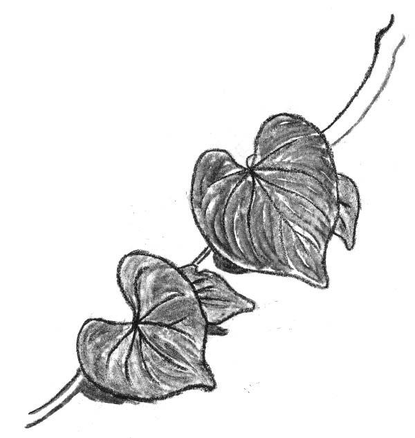 1e5f82cd8 FND110 - Drawing - Vine Leaves by graenflame on DeviantArt
