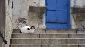 Le chat et la porte bleue