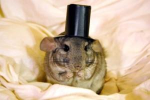 anonymous-chinchilla's Profile Picture